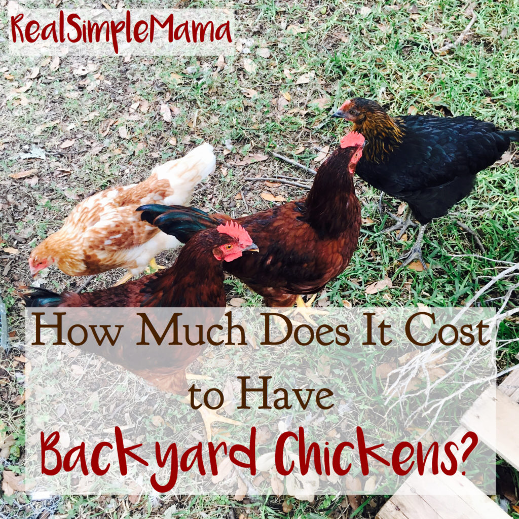 How Much Does It Cost To Have Backyard Chickens?